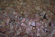 Rockhole Frogs.jpg